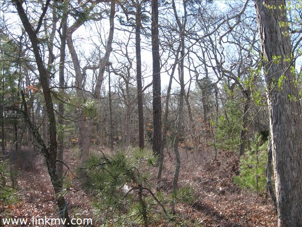 WOODED PRIVATE LOT!