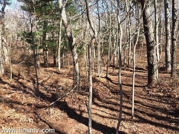 Contoured land w/ pines, beetlebung and oak