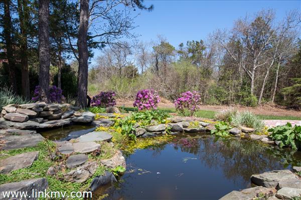 Pond, rear yard.