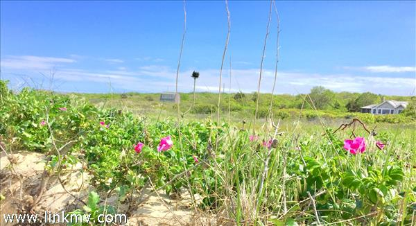 Roses and the Ospreys Nest at your beach