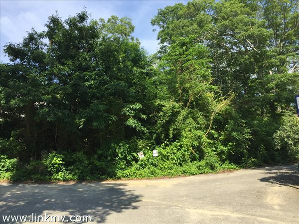 Wooded lot